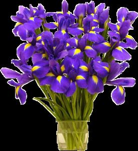 Fleurs_bleu